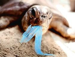 Isola di plastica nel mediterraneo