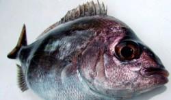 Pesce radioattivo