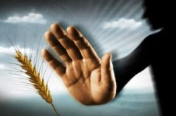 Basta OGM