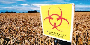 Monsanto semi trattati veleni 1