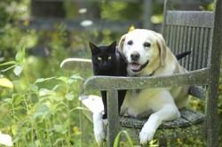 Cani e Gatti allungano la vita