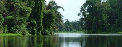 Foreste primarie