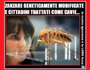 Zanzare geneticamente modificate Florida