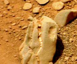 Cranio dinosauro su Marte