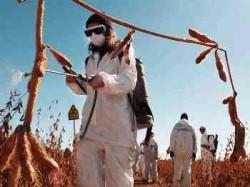 Protesta Monsanto