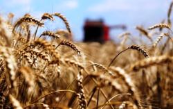 Ucraina e Monsanto