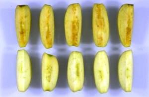 Mela OGM canadese