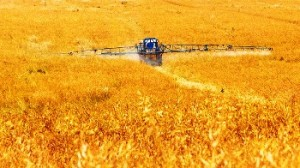 avvelenati dai pesticidi