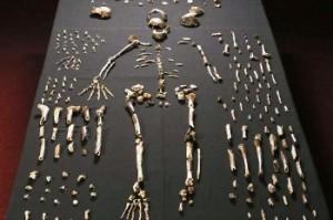 Nuova specie di ominide Homo naledi