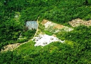 Brasile foresta Amazzonia