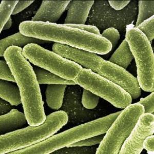 batteri resistenti antibiiotici
