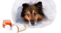 farmaci generici per animali