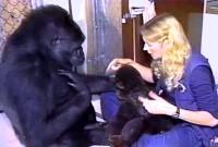 Koko e la dottoressa Patterson