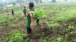 bambini al lavoro in Uganda