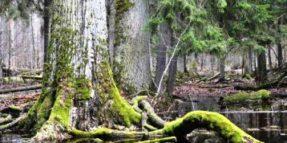 Deforestazione Polonia