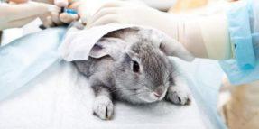 Divieto commercio cosmetici testati su animali in Europa